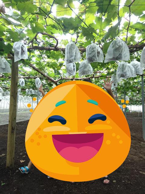 ランド 霧島 フルーツ 【シソくん散歩第11回】涼しい秋のおでかけ!果物狩り&アート体験